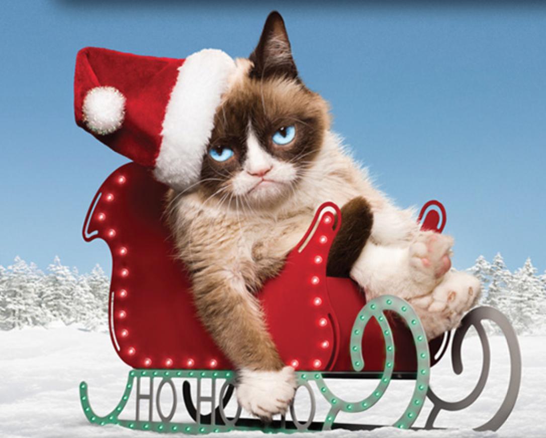 concours avatar de noël 2015, règlement et inscription..  - Page 4 Grumpy-cat