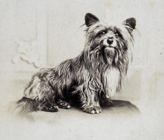 greyfriars-bobby_famous-doggies-id-love-meet