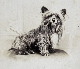 greyfriars-bobby_famous-doggies-id-love-meet