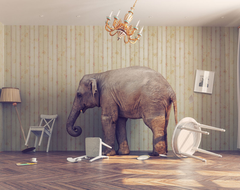 Elephant In Room That Needs To Be >> The Elephant In The Room